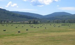 Pleasant Valley Bales
